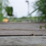 Auf Karpfen – 27.06.2013